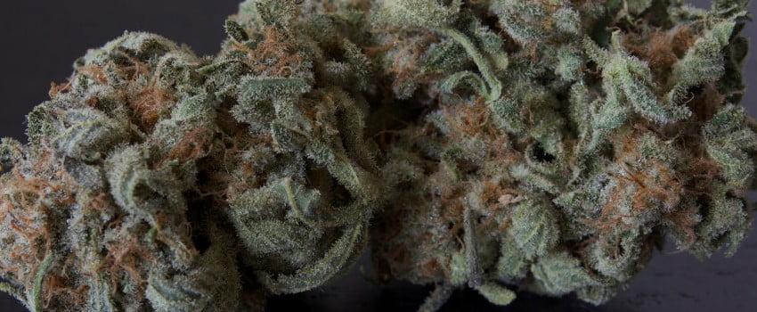Purple Martian Kush Medical
