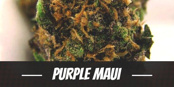 Purple Maui