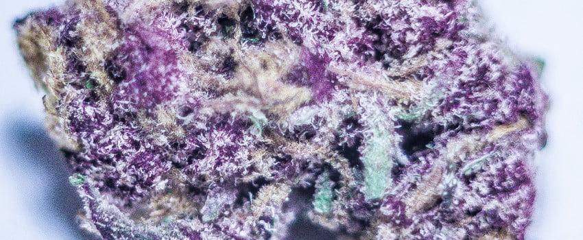 Purple Maui Effects