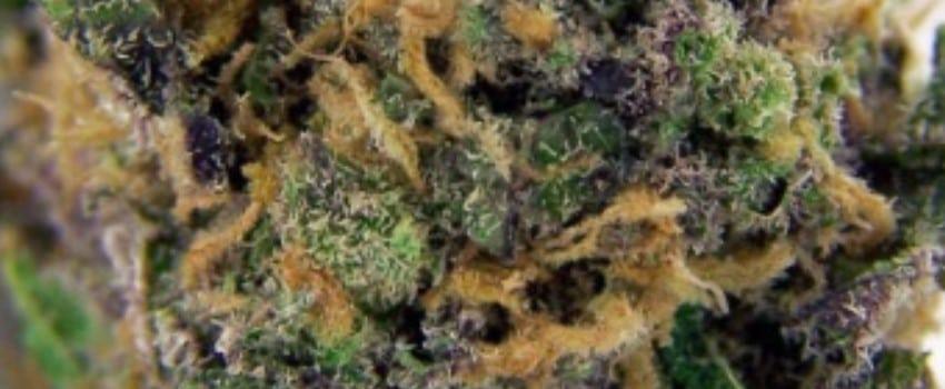 Purple Maui Medical