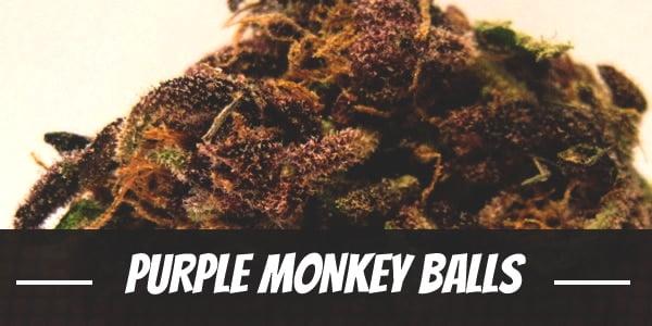Purple Monkey Balls