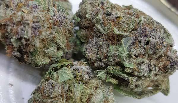 Purple Panty Dropper Strain Medical