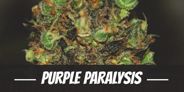 Purple Paralysis