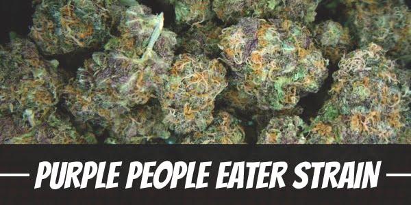 Purple People Eater Strain