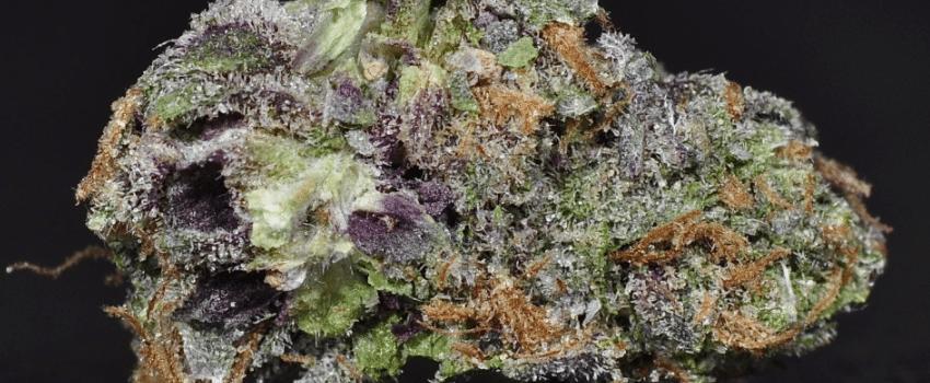 Purple Rhino Effects