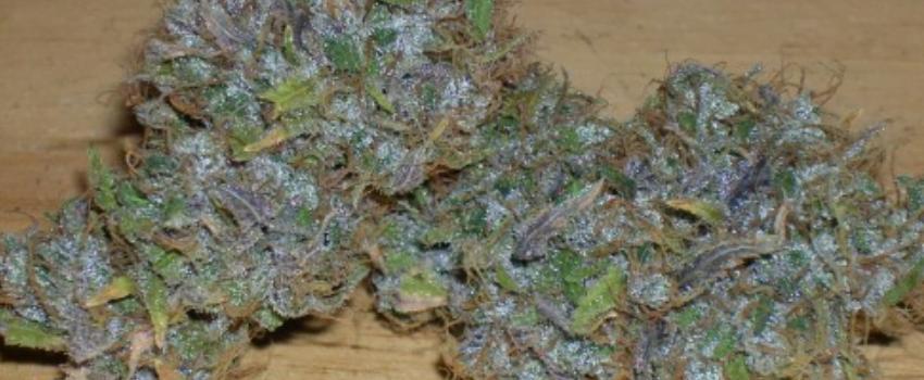 Purple Sage Adverse Reaction