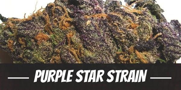 Purple Star Strain