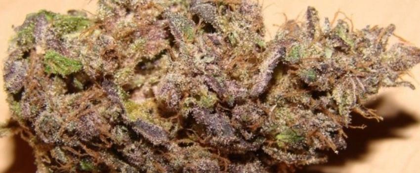 Purple Swish Medical