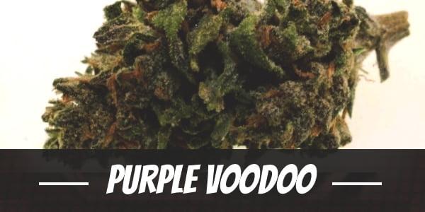 Purple Voodoo