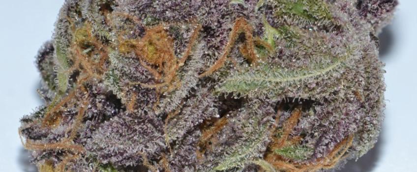 Purple_Dragon_Medical
