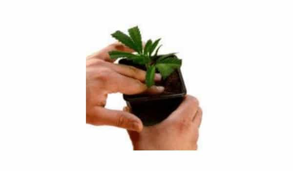 Push the plant a little