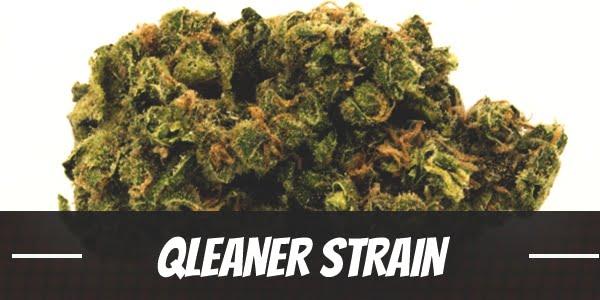 Qleaner Strain