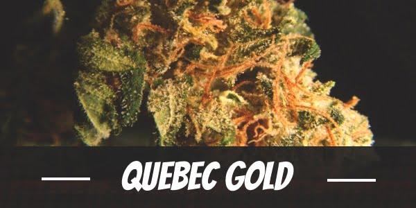 Quebec Gold