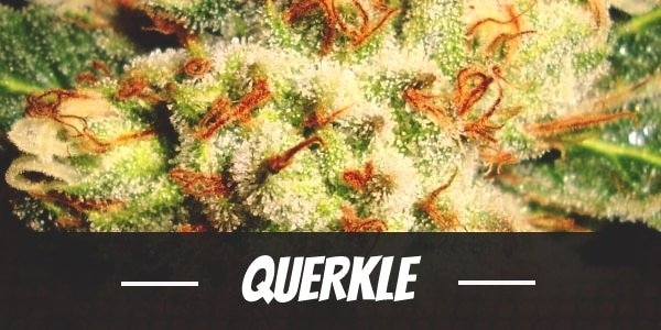 Querkle