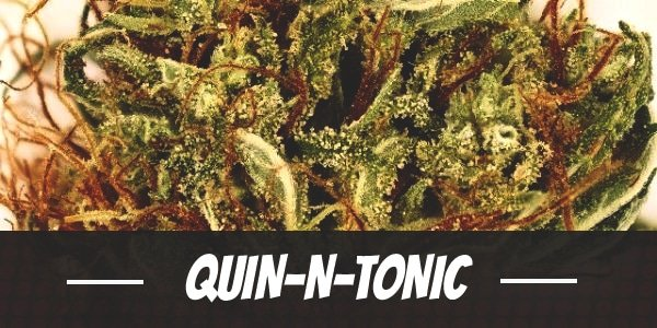 Quin-N-Tonic