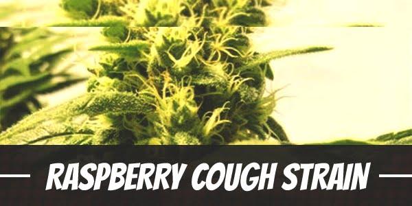 Raspberry Cough Strain