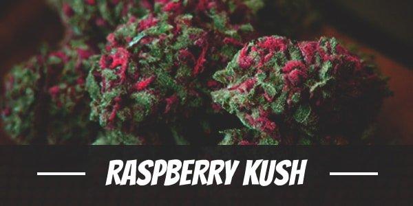 Raspberry Kush