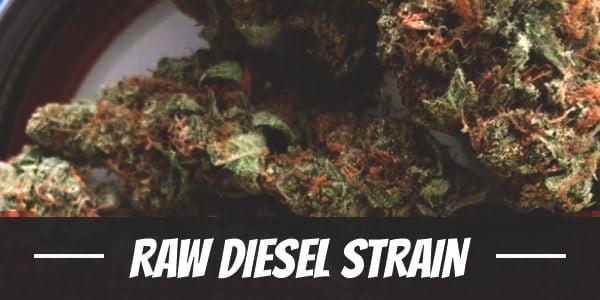 Raw Diesel Strain