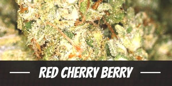 Red Cherry Berry