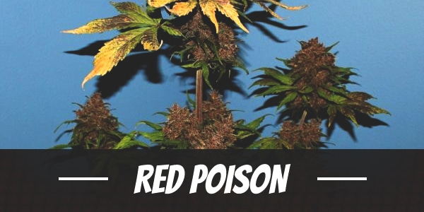 Red Poison