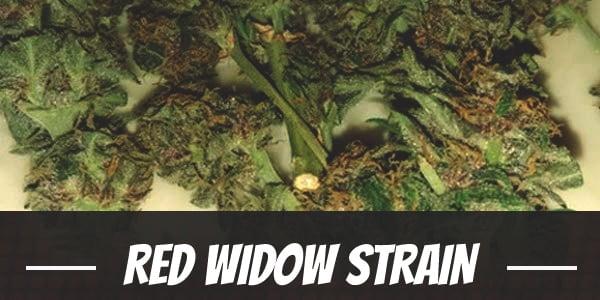 Red Widow Strain