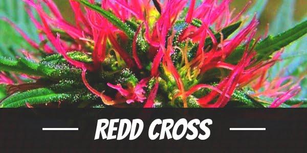 Redd Cross