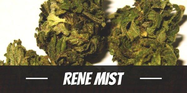 Rene Mist