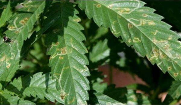 Repel Pests