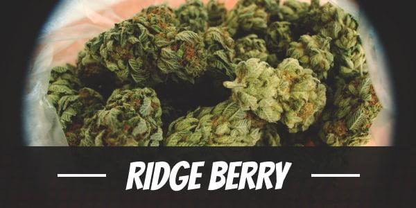 Ridge Berry