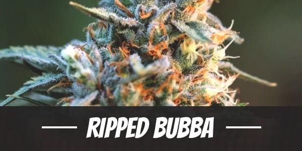 Ripped Bubba