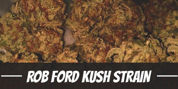 Rob Ford Kush Strain