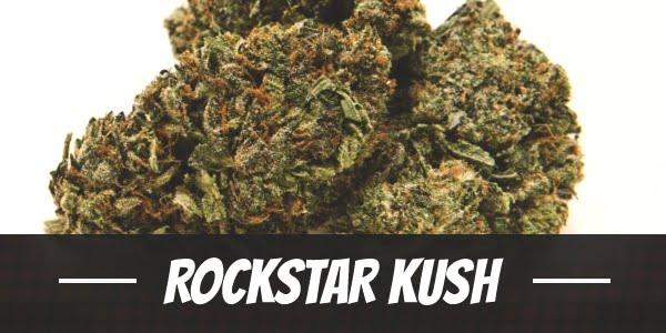 Rockstar Kush