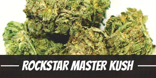 Rockstar Master Kush