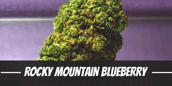 Rocky Mountain Blueberry