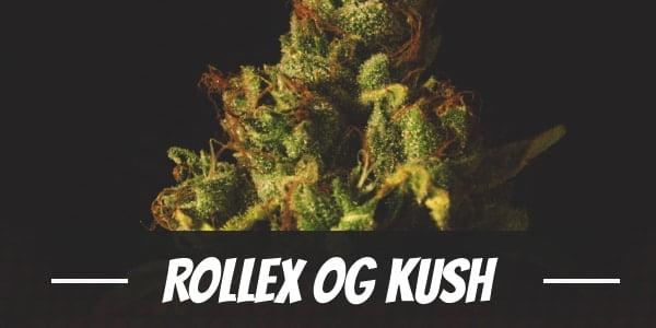 Rollex OG Kush