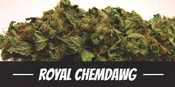 Royal Chemdawg