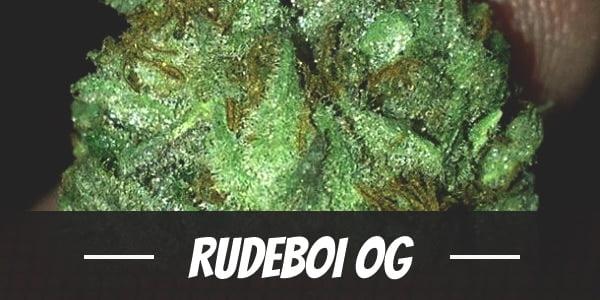 RudeBoi OG