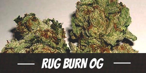 Rug Burn OG