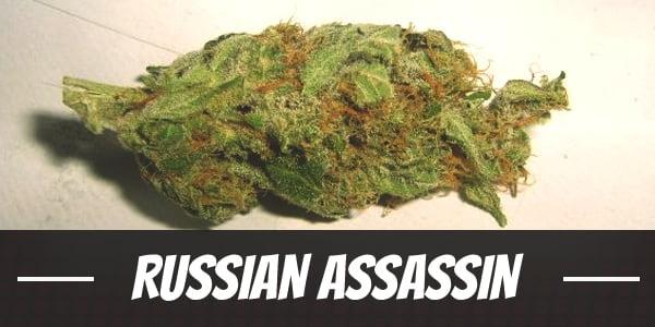 Russian Assassin