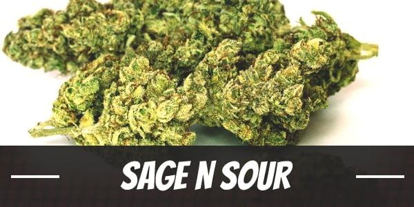 Sage N Sour