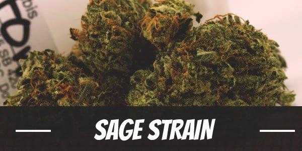 Sage Strain