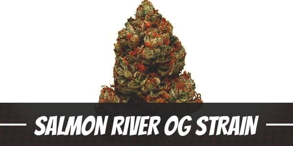 Salmon River OG Strain