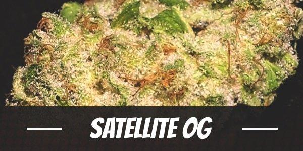 Satellite OG