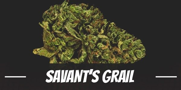 Savant's Grail