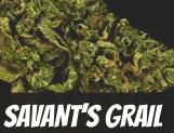 Savant's Grail Strain