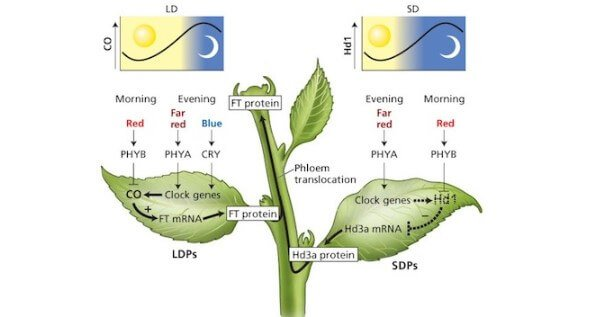 Science behind the light cycles