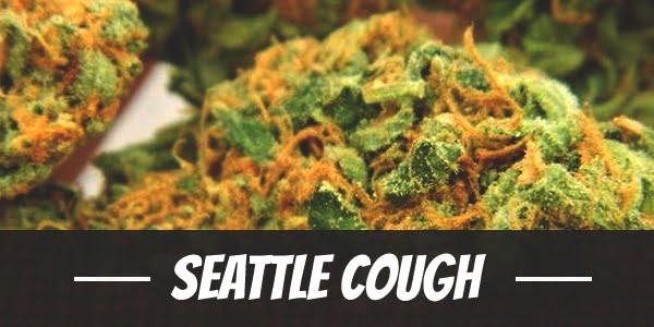 Seattle Cough
