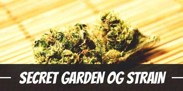 Secret Garden OG Strain