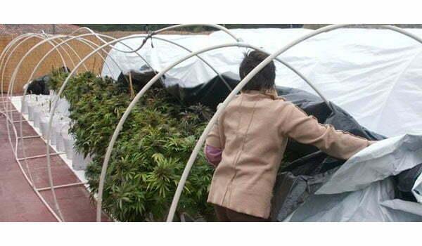 Self-made greenhouse