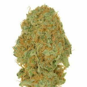 Shiva Bud